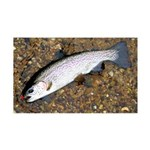 Taneycomo Rainbow Trout PS Wall Decal