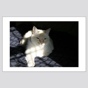 Arries The Cat Large Poster
