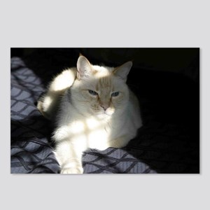 Flame Point Cat Postcards (Package of 8)