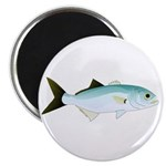 Bluefish Magnet