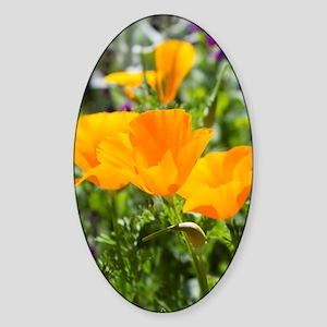 California Poppies Sticker (Oval)