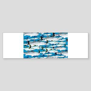 Montauk School of Fish Attack pattern 1 sq Bumper