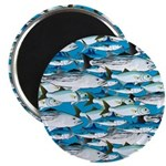 Montauk School of Fish Attack pattern 1 sq Magnet