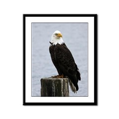 Eagles of the Comox Valley