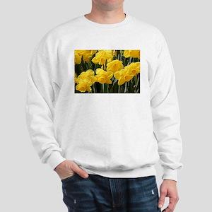 Daffodil flowers in bloom Sweatshirt