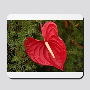 Anthurium flower in bloom Mousepad