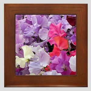 Sweet peas flowers in bloom Framed Tile