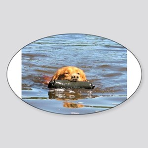 nova scotia duck tolling retriever Sticker