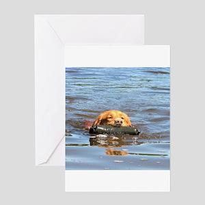 nova scotia duck tolling retriever Greeting Cards