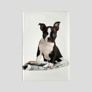 Boston Terrier Rectangle Magnet