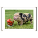 Micro pig with strawberries Banner