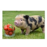 Micro pig with strawberries Postcards (Package of