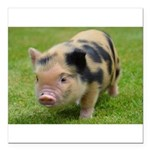 Little Spotty micro pig Square Car Magnet 3