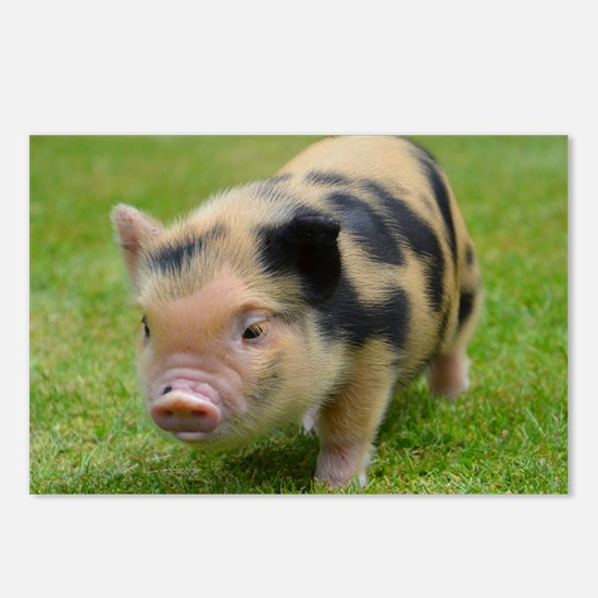Little Spotty micro pig Postcards (Package of 8)