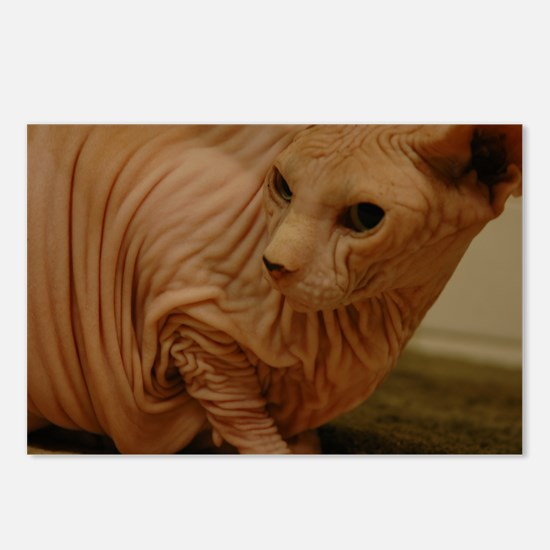 wrinklecat.JPG Postcards (Package of 8)