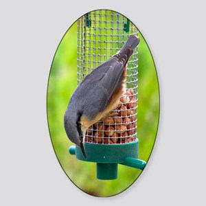 ...Nuthatch... Oval Sticker