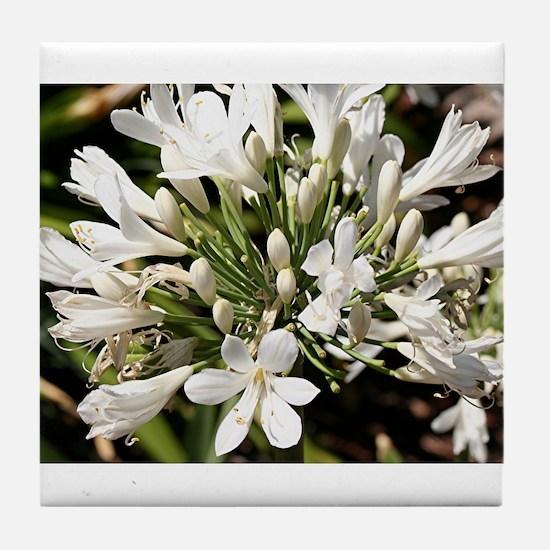 Agapanthus (white) flower in bloom Tile Coaster