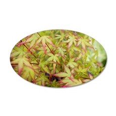 Japanese Maple Wall Decal