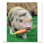 Micro pig with carrot Square Car Magnet 3