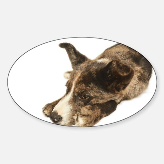 Adorable Rescue Australian Shepherd Mix Decal