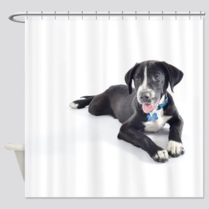 Funny Pointer and Lab Mix Shower Curtain