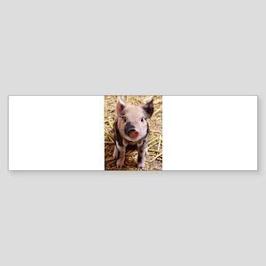 This Little Piggy Bumper Sticker