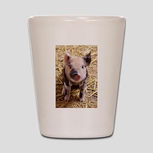 This Little Piggy Shot Glass