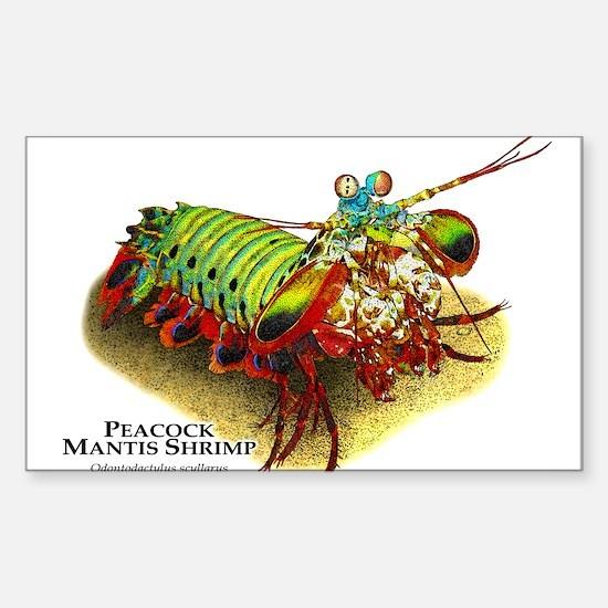 Peacock Mantis Shrimp Sticker (Rectangle)