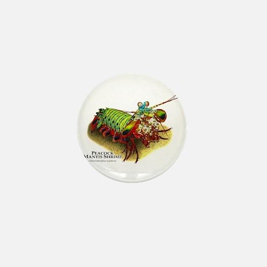 Peacock Mantis Shrimp Mini Button
