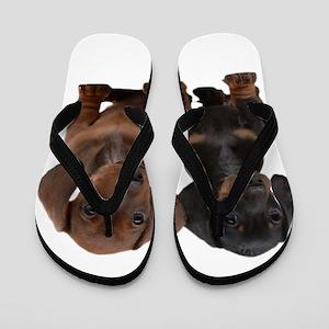 Dachshunds Flip Flops