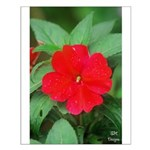 Red Hot Floral Photography Posters