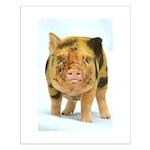 Messy micro pig Poster Design