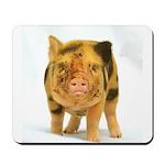 Micro pig looking messy Mousepad