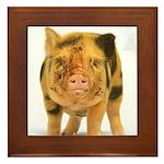 Micro pig looking messy Framed Tile