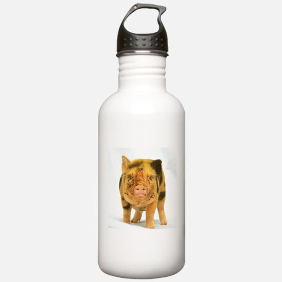 Micro pig looking messy Sports Water Bottle