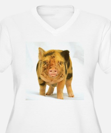 Micro pig looking messy Plus Size T-Shirt