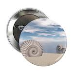 Beach of Shells 2.25
