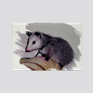 Baby Possum Rectangle Magnet