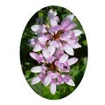 Redbud in MO Cercis canadensis f Ornament (Oval)