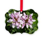 Redbud in MO Cercis canadensis f Ornament