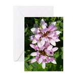Redbud in MO Cercis canadensis f Greeting Card