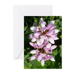 Redbud in MO Cercis canadensis f Greeting Cards (P