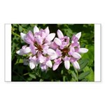 Redbud in MO Cercis canadensis f Sticker