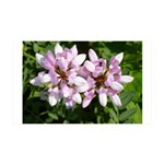 Redbud in MO Cercis canadensis f Wall Decal