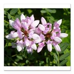 Redbud in MO Cercis canadensis f Square Car Magnet