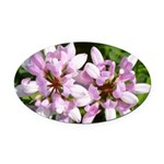 Redbud in MO Cercis canadensis f Oval Car Magnet
