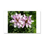 Redbud in MO Cercis canadensis f Car Magnet 20 x 1