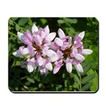 Redbud in MO Cercis canadensis f Mousepad