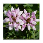 Redbud in MO Cercis canadensis f Tile Coaster