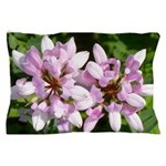 Redbud in MO Cercis canadensis f Pillow Case
